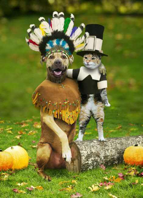 Funny Thanksgiving Pictures Free